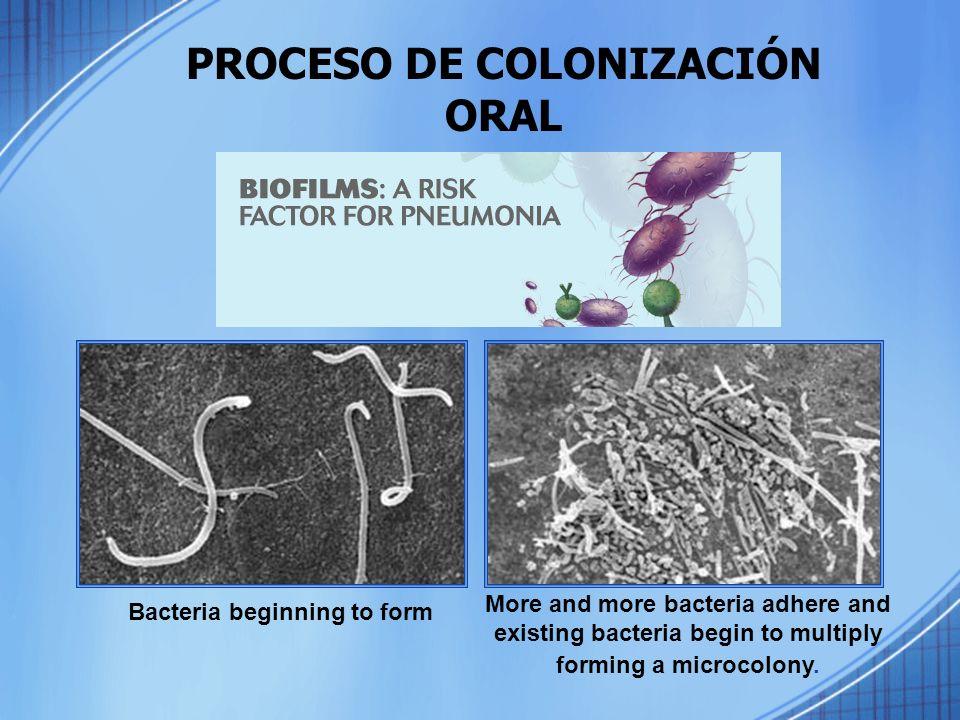 PROCESO DE COLONIZACIÓN ORAL