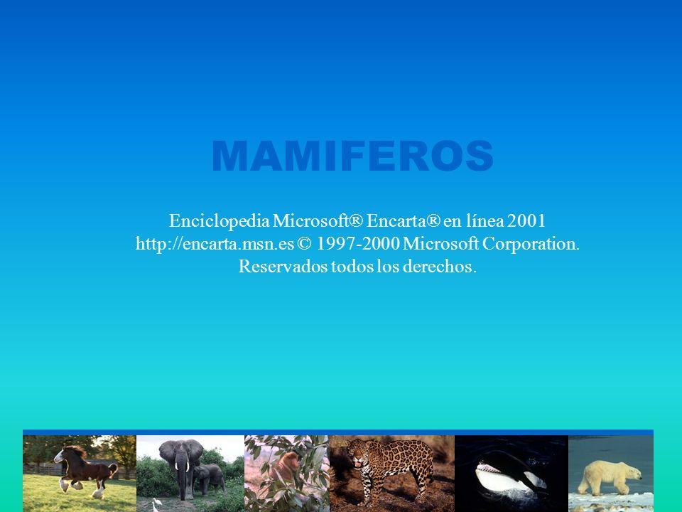 MAMIFEROS Enciclopedia Microsoft® Encarta® en línea 2001 http://encarta.msn.es © 1997-2000 Microsoft Corporation.