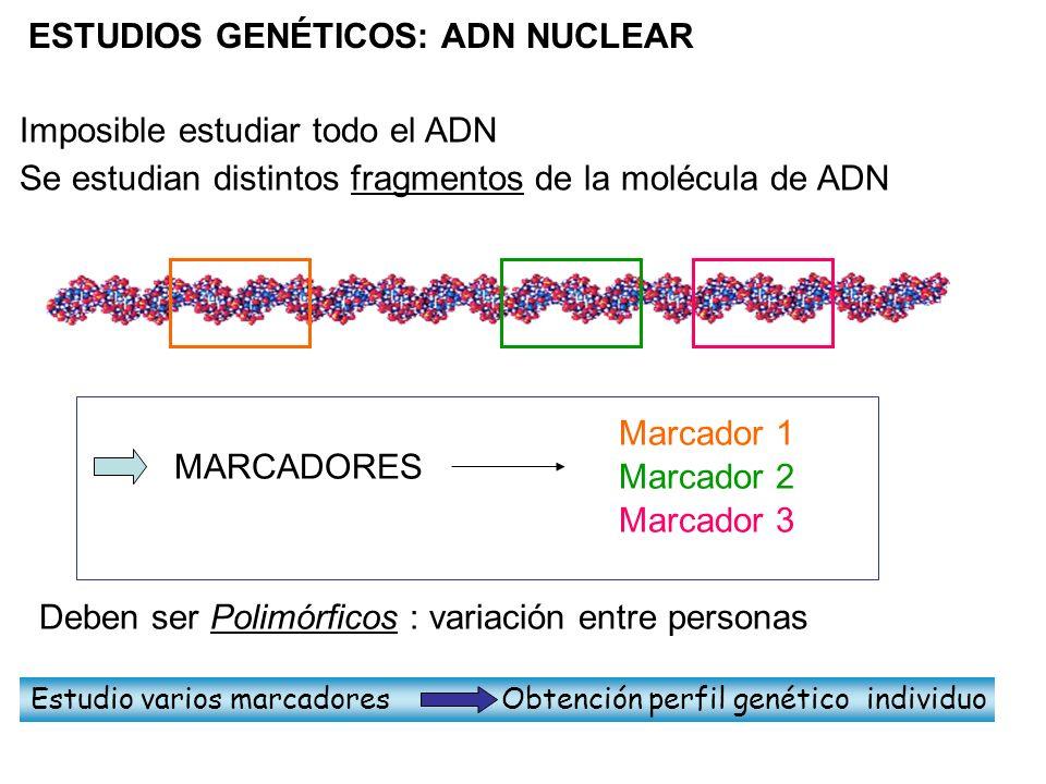 ESTUDIOS GENÉTICOS: ADN NUCLEAR