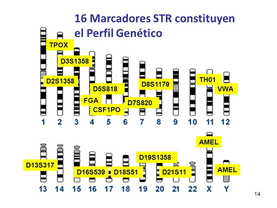 16 Marcadores STR constituyen el Perfil Genético