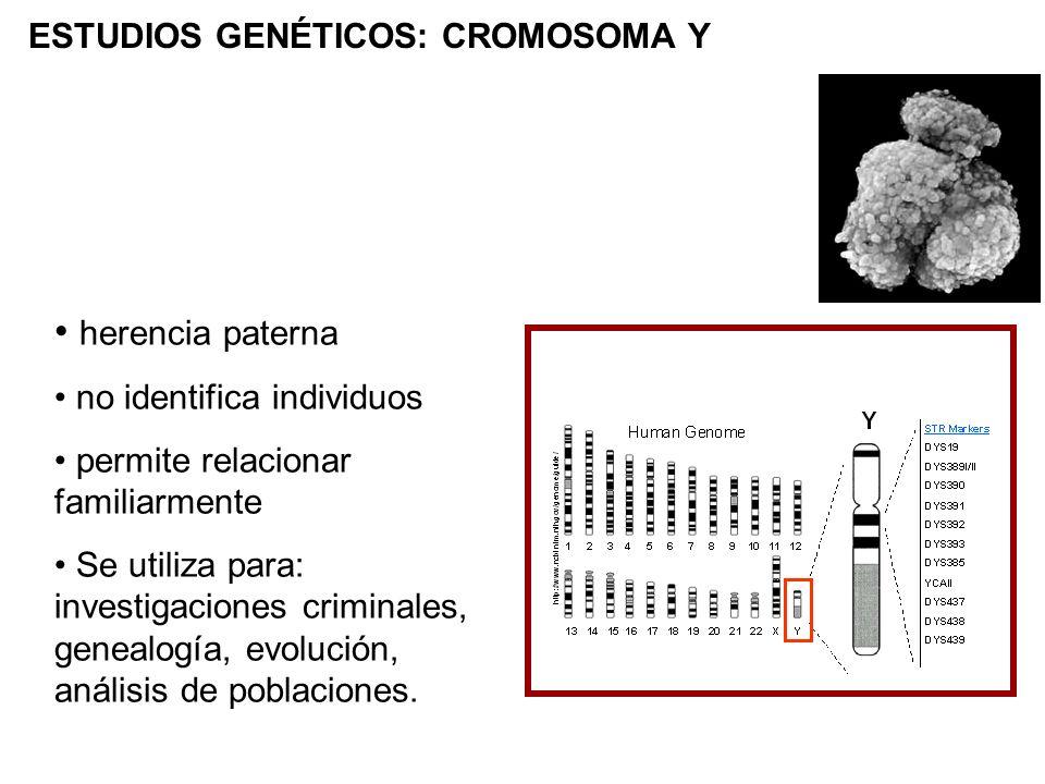herencia paterna ESTUDIOS GENÉTICOS: CROMOSOMA Y