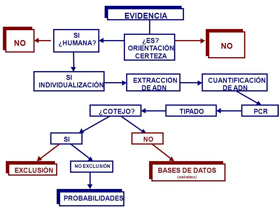 EVIDENCIA NO SI ¿HUMANA INDIVIDUALIZACIÓN EXTRACCIÓN DE ADN