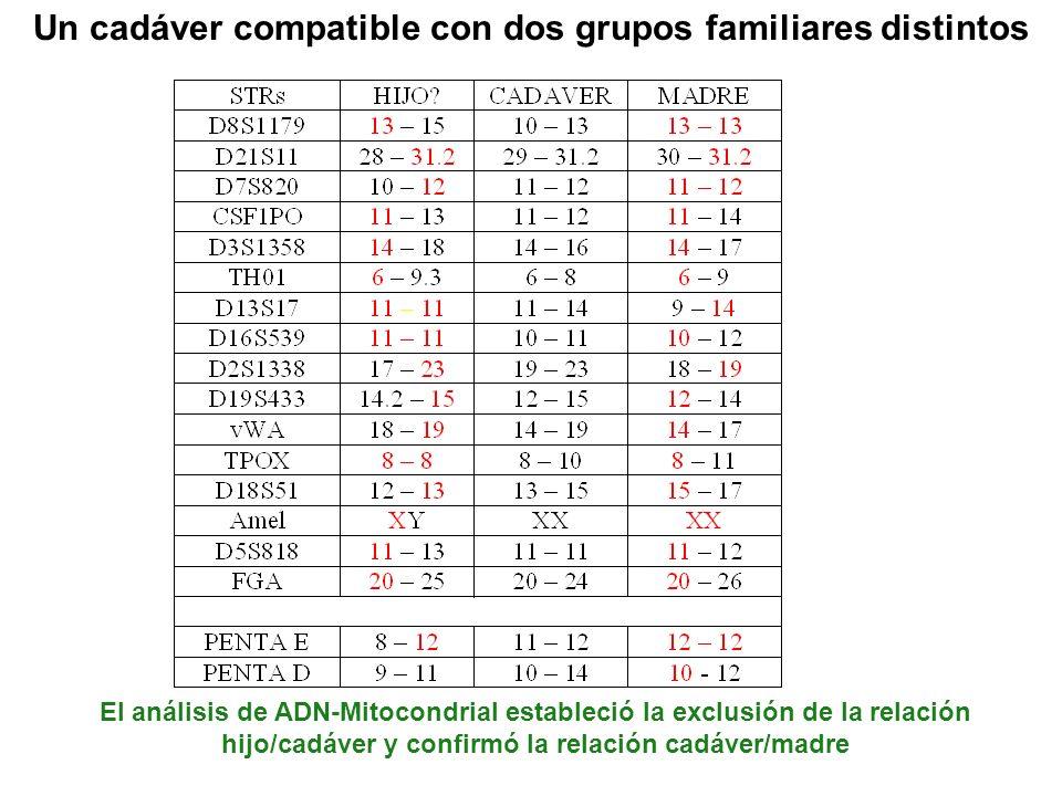 Un cadáver compatible con dos grupos familiares distintos