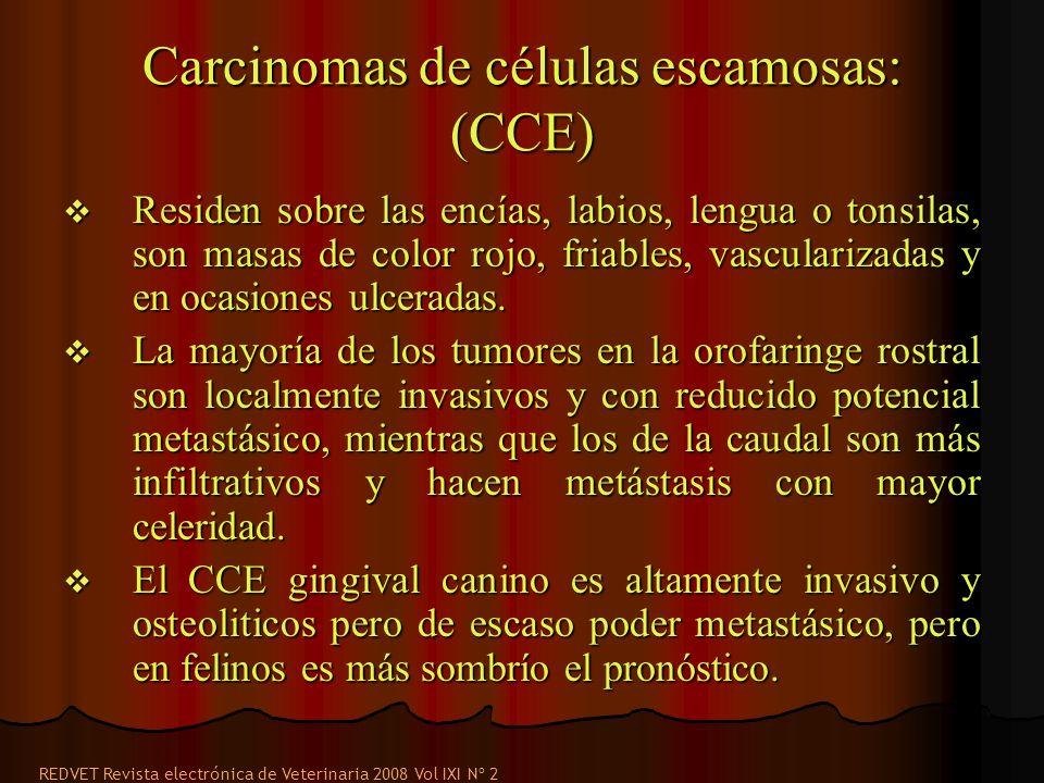 Carcinomas de células escamosas: (CCE)