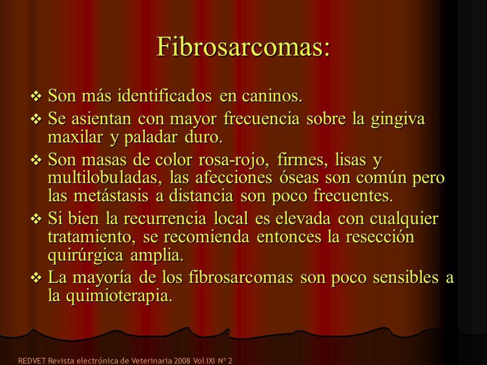 Fibrosarcomas: Son más identificados en caninos.