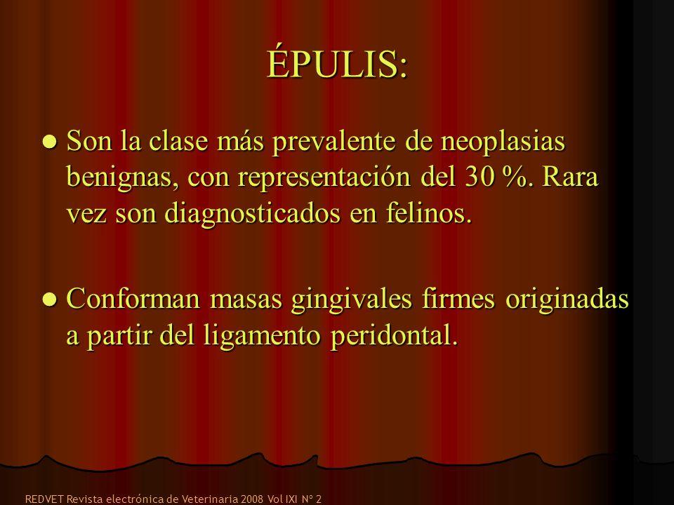 ÉPULIS: Son la clase más prevalente de neoplasias benignas, con representación del 30 %. Rara vez son diagnosticados en felinos.