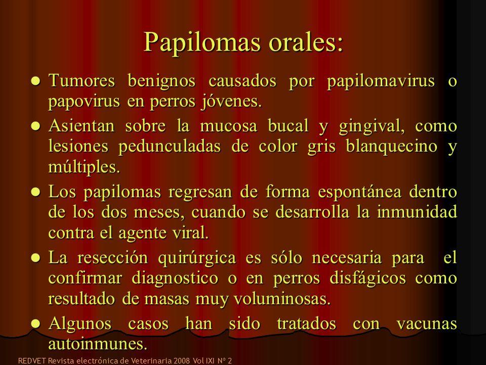 Papilomas orales: Tumores benignos causados por papilomavirus o papovirus en perros jóvenes.