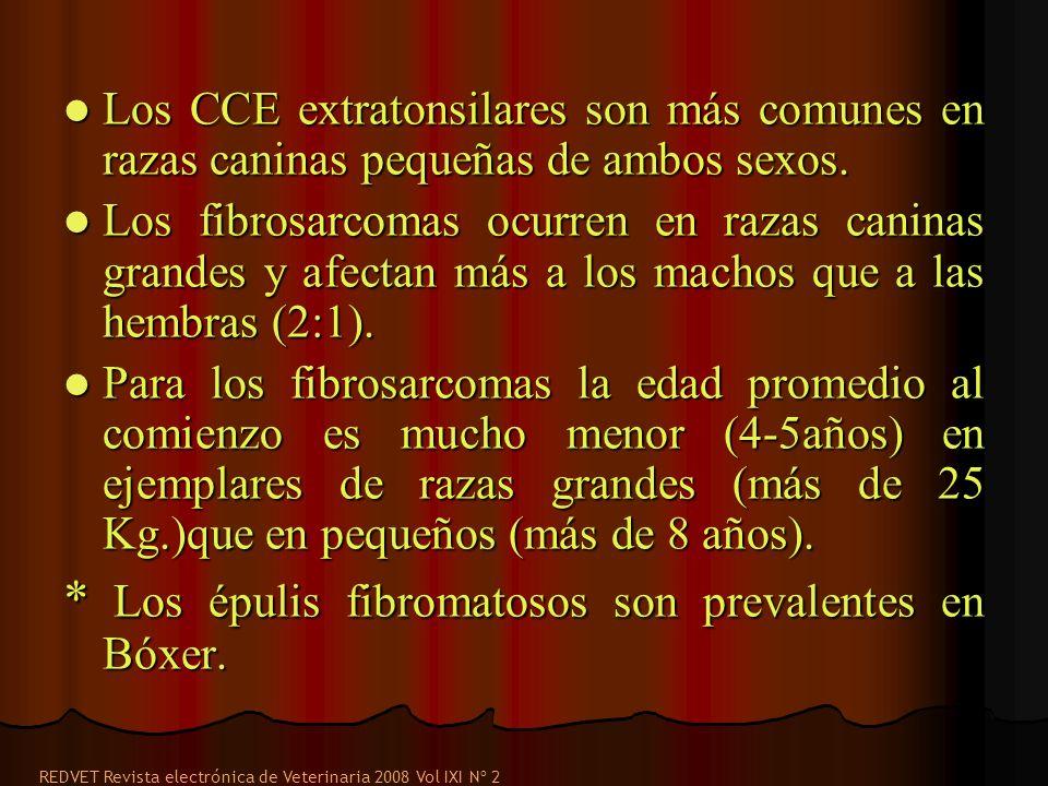 * Los épulis fibromatosos son prevalentes en Bóxer.