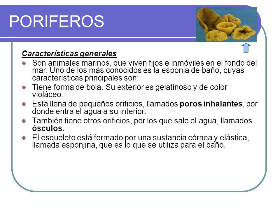 PORIFEROS Características generales