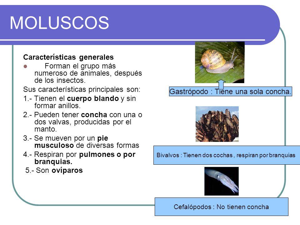 MOLUSCOS Características generales