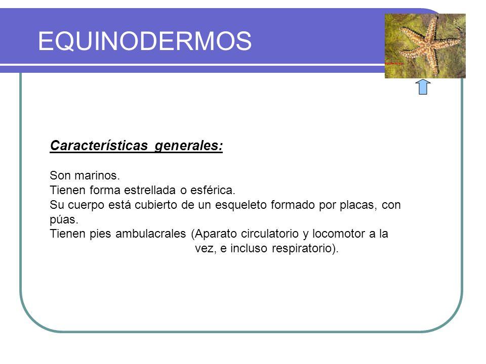 CLASIFICACION DEL REINO ANIMAL
