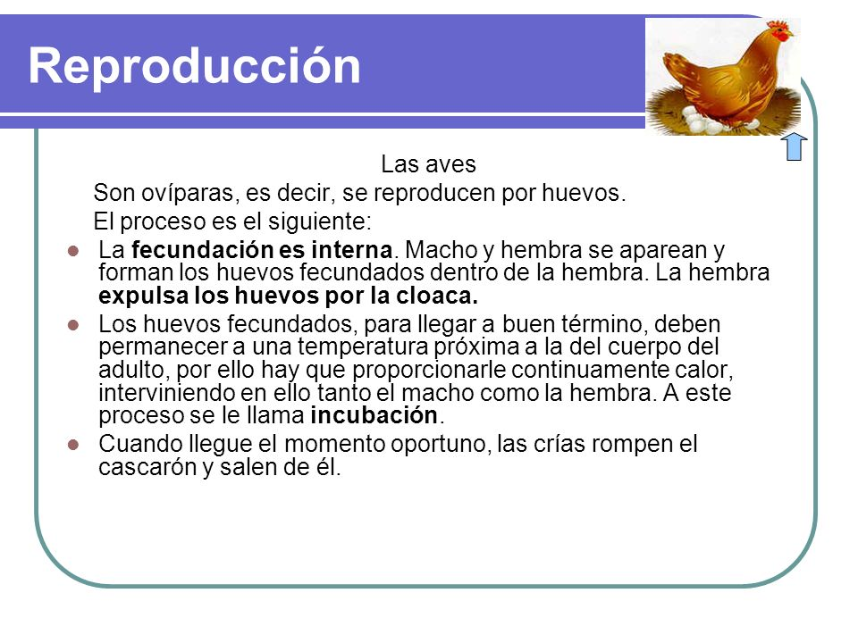 Reproducción Las aves. Son ovíparas, es decir, se reproducen por huevos. El proceso es el siguiente: