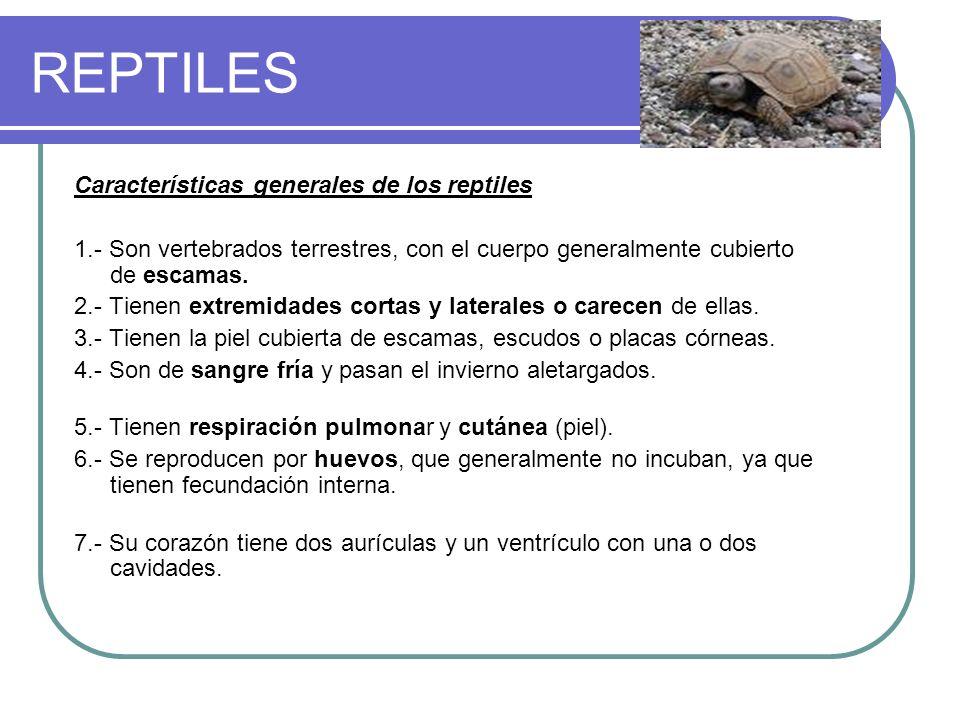 REPTILES Características generales de los reptiles