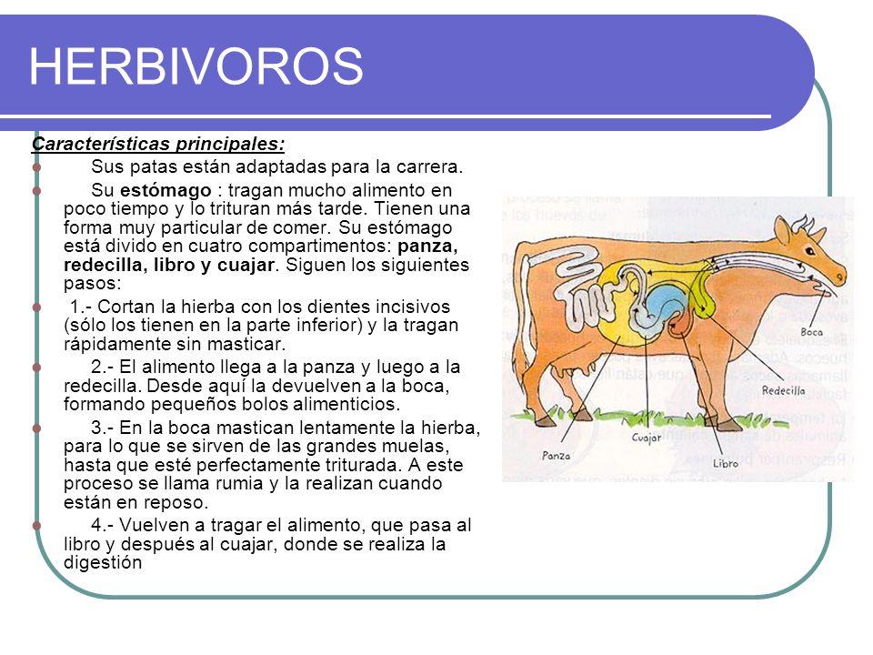 HERBIVOROS Características principales: