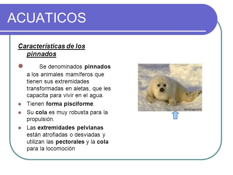 ACUATICOS Características de los pinnados.
