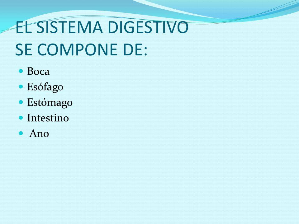 EL SISTEMA DIGESTIVO SE COMPONE DE: