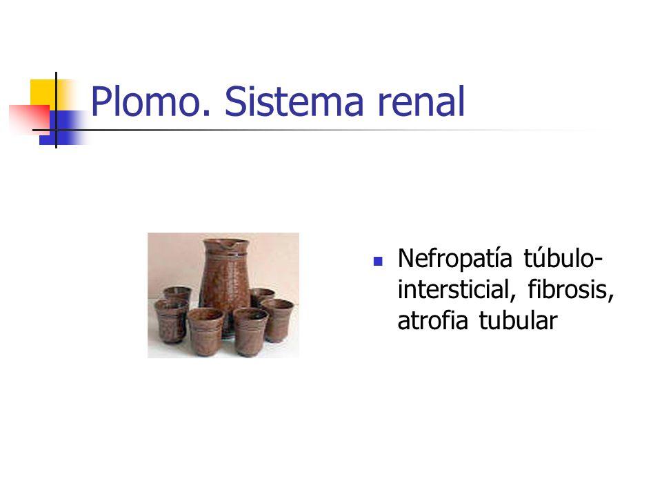 Plomo. Sistema renal Nefropatía túbulo-intersticial, fibrosis, atrofia tubular