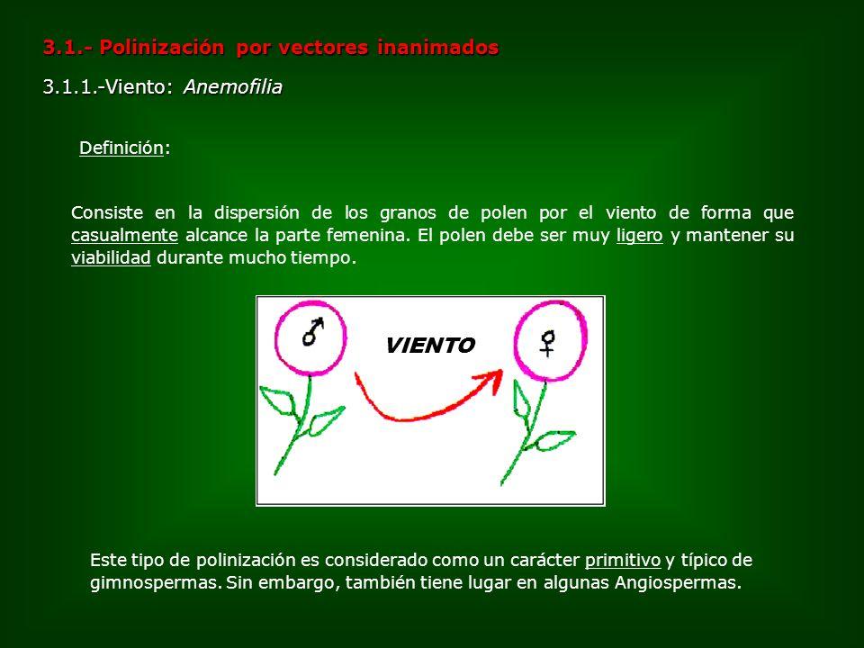 VIENTO 3.1.- Polinización por vectores inanimados