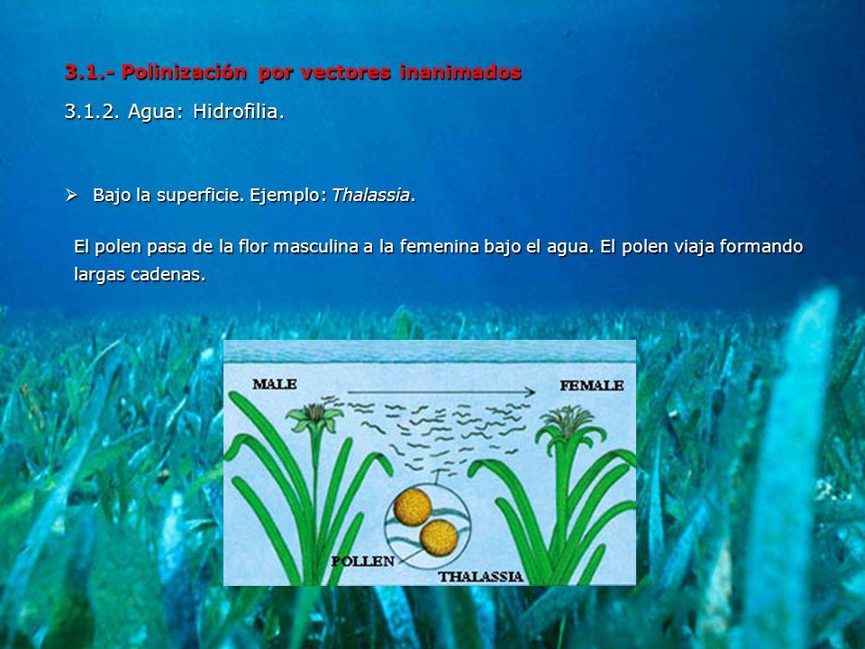 3.1.- Polinización por vectores inanimados 3.1.2. Agua: Hidrofilia.