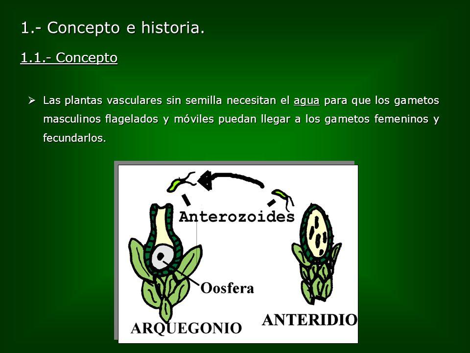 1.- Concepto e historia. 1.1.- Concepto