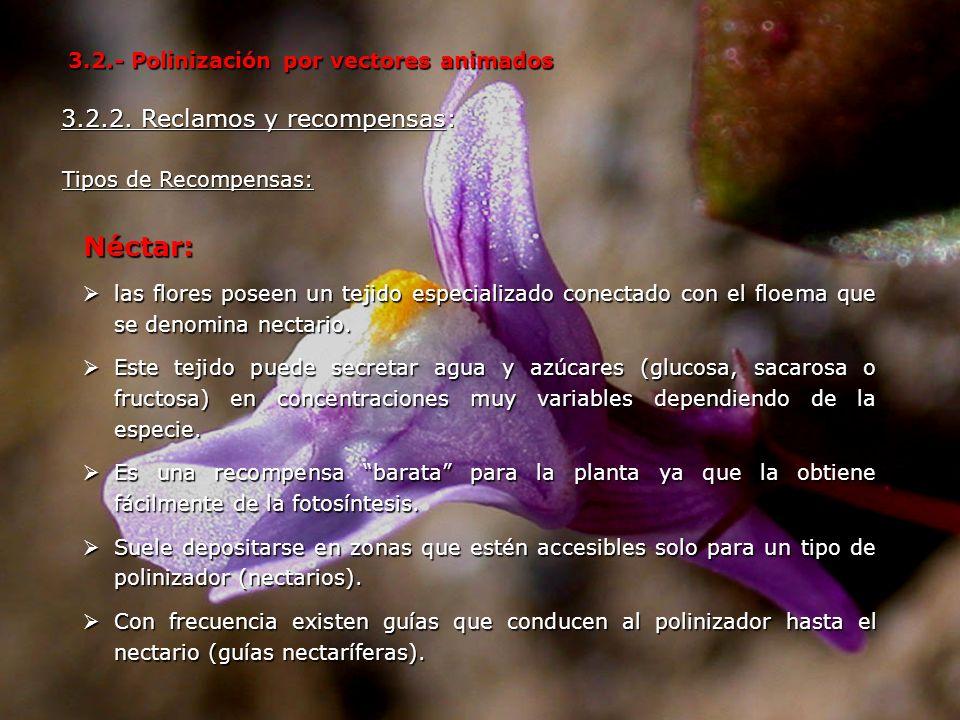 Néctar: 3.2.2. Reclamos y recompensas:
