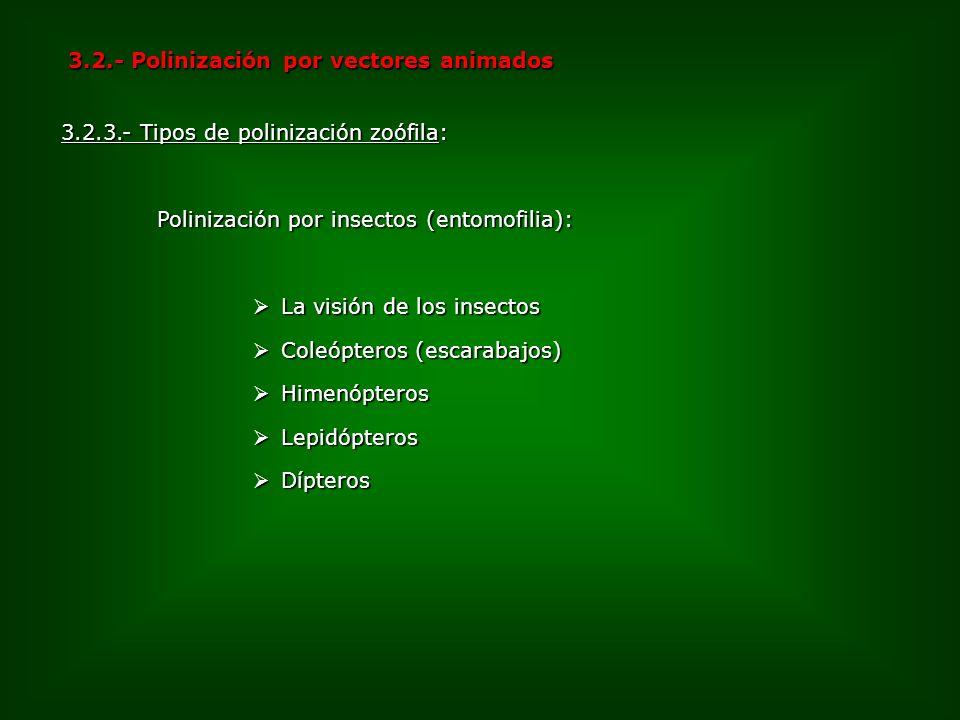 3.2.- Polinización por vectores animados