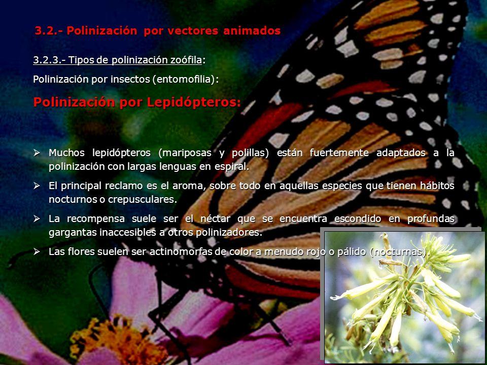 Polinización por Lepidópteros: