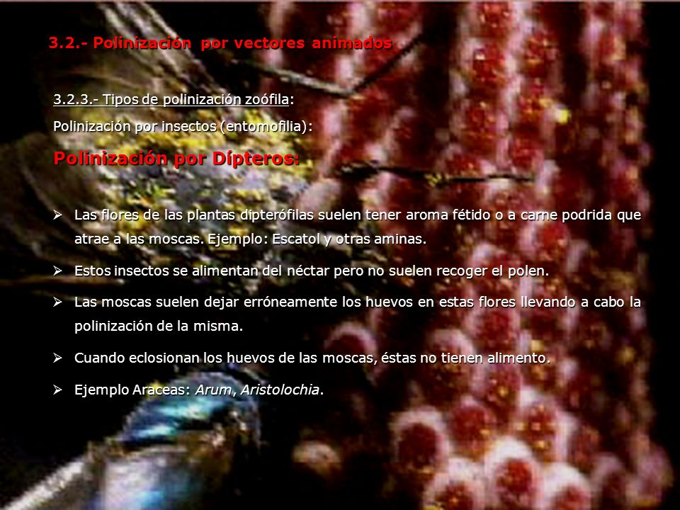 Polinización por Dípteros: