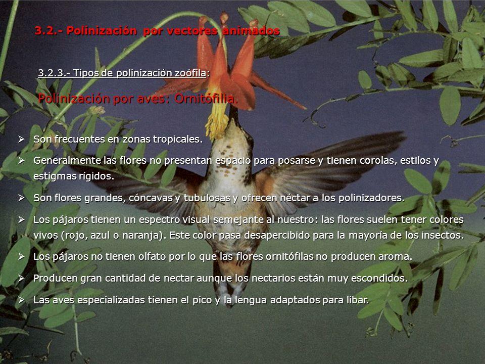 Polinización por aves: Ornitófilia.