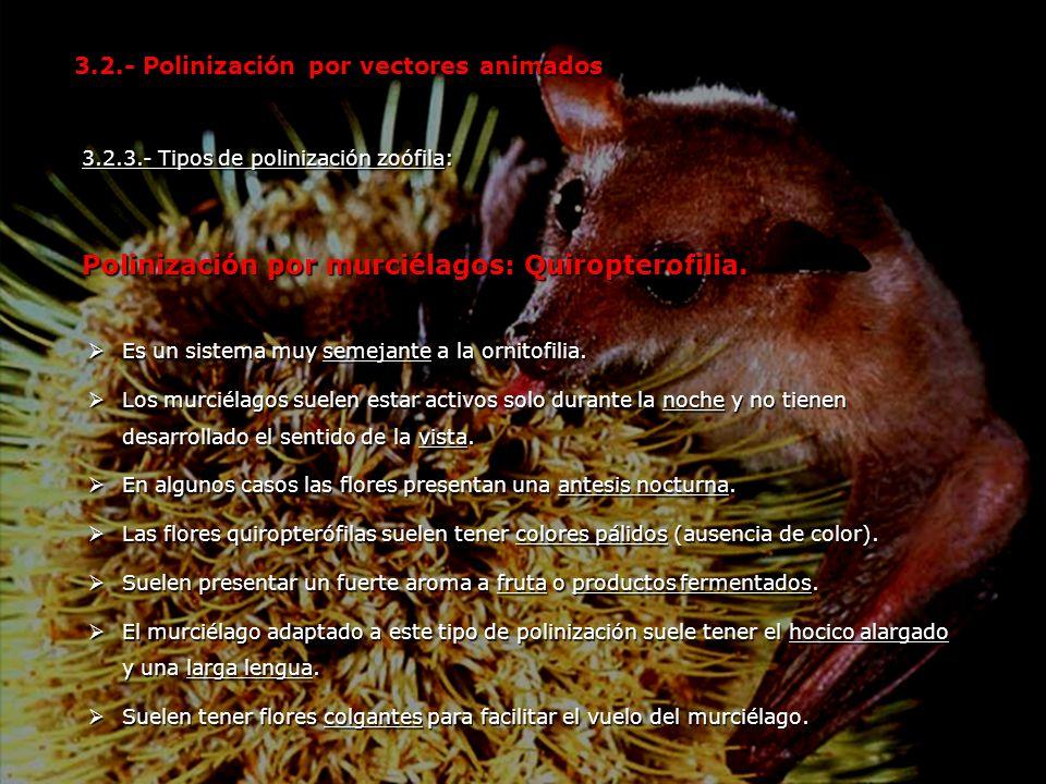 Polinización por murciélagos: Quiropterofilia.