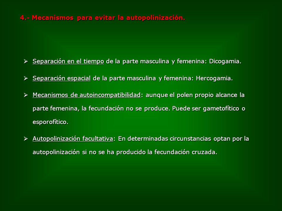 4.- Mecanismos para evitar la autopolinización.