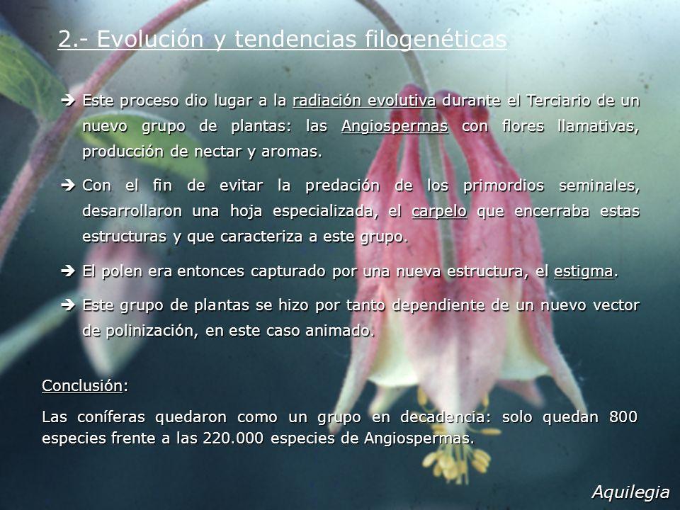2.- Evolución y tendencias filogenéticas