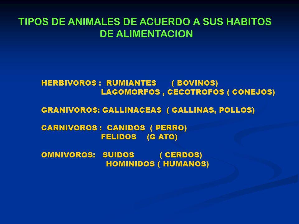 TIPOS DE ANIMALES DE ACUERDO A SUS HABITOS