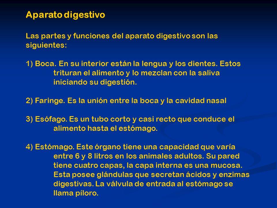 Aparato digestivo Las partes y funciones del aparato digestivo son las siguientes: