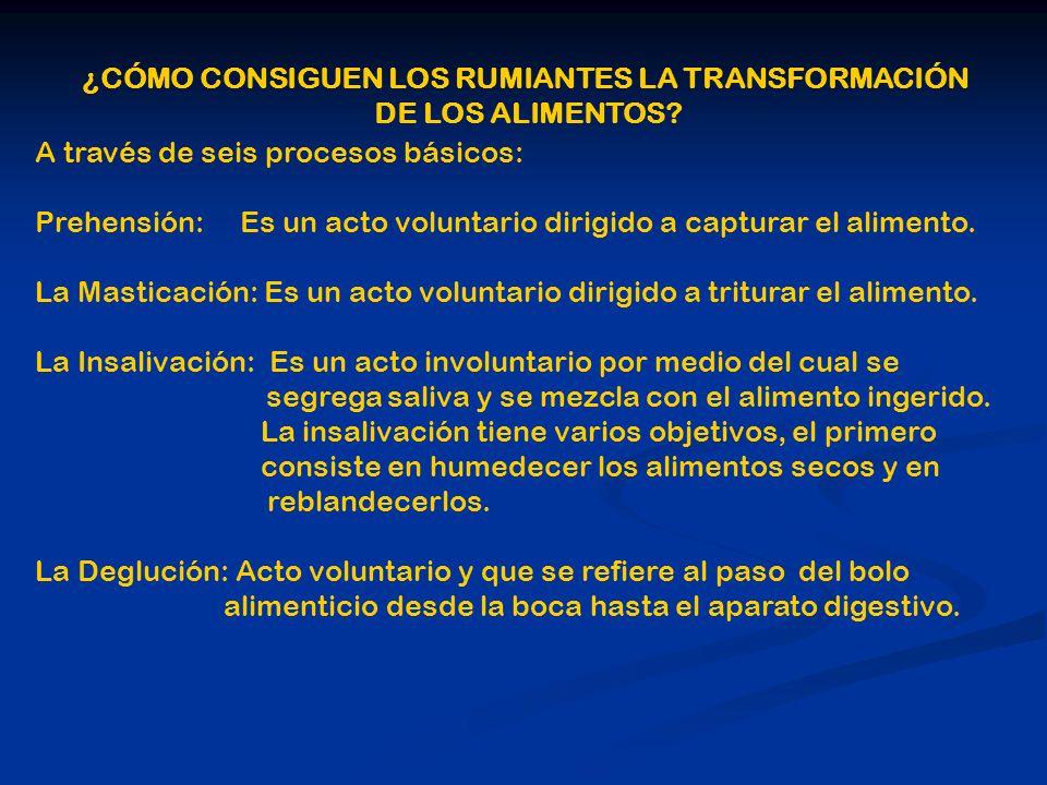 ¿CÓMO CONSIGUEN LOS RUMIANTES LA TRANSFORMACIÓN