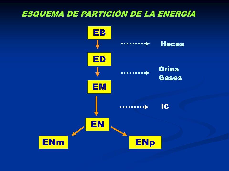 EB ED EM EN ENm ENp ESQUEMA DE PARTICIÓN DE LA ENERGÍA Heces Orina