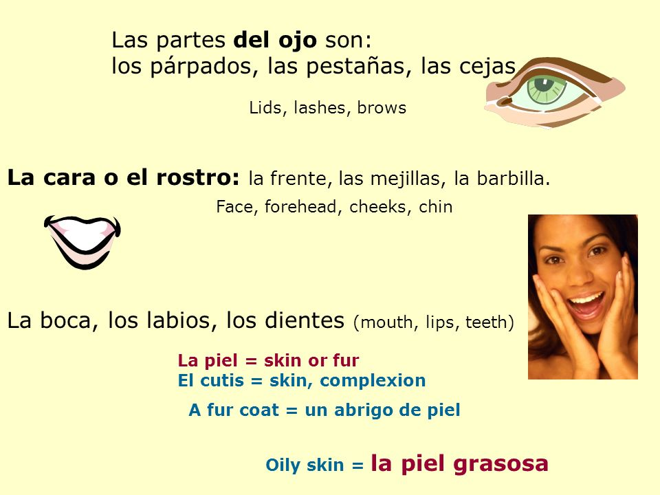 Las partes del ojo son: los párpados, las pestañas, las cejas.