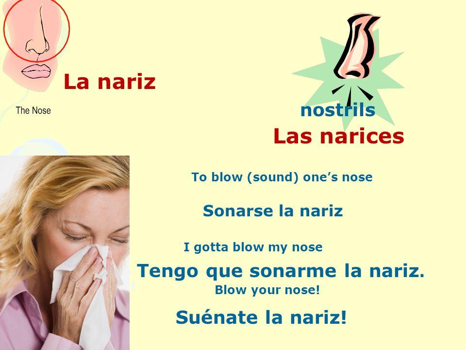 La nariz Las narices Tengo que sonarme la nariz. Suénate la nariz!