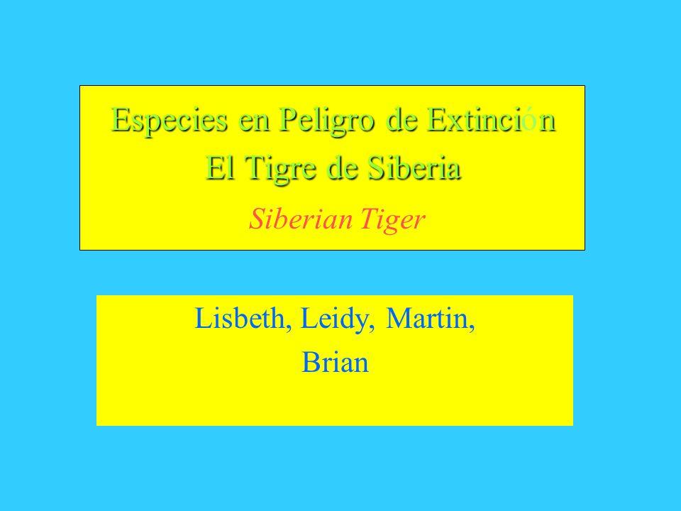 Especies en Peligro de Extinción El Tigre de Siberia Siberian Tiger