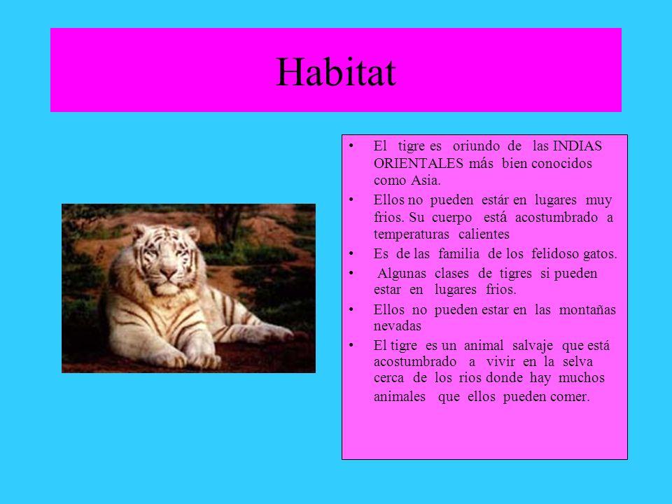 Habitat El tigre es oriundo de las INDIAS ORIENTALES más bien conocidos como Asia.