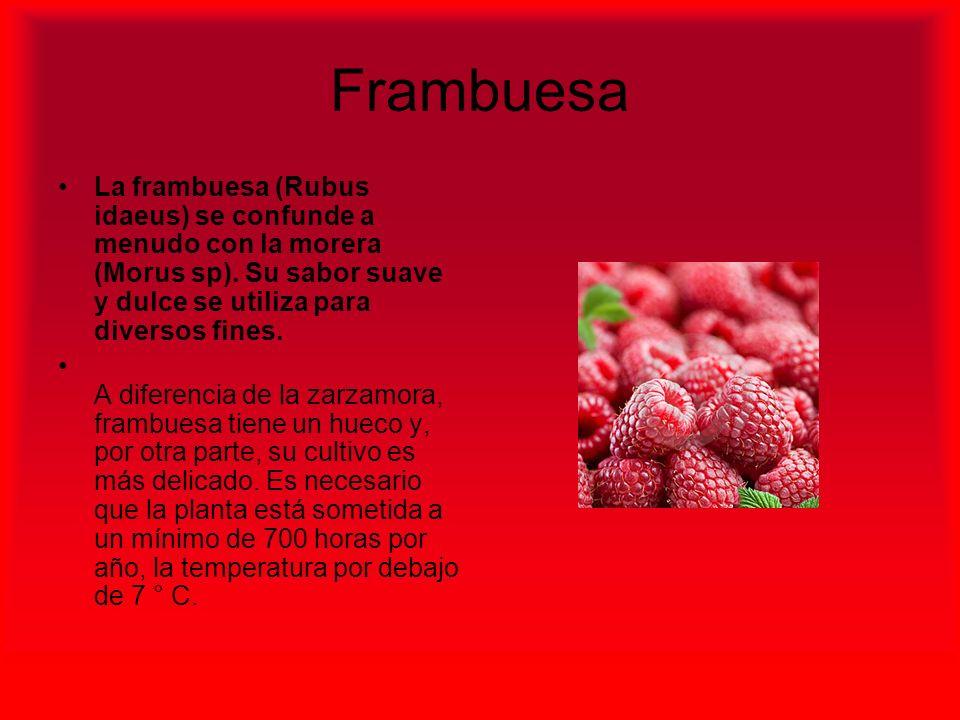 Frambuesa La frambuesa (Rubus idaeus) se confunde a menudo con la morera (Morus sp). Su sabor suave y dulce se utiliza para diversos fines.