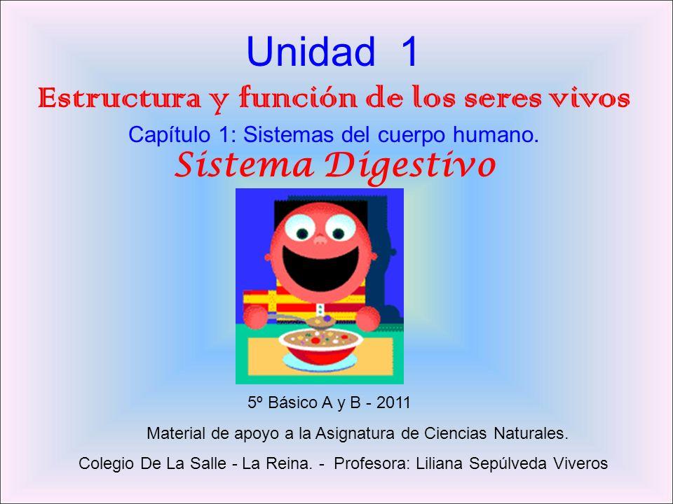 Unidad 1 Estructura y función de los seres vivos Capítulo 1: Sistemas del cuerpo humano.