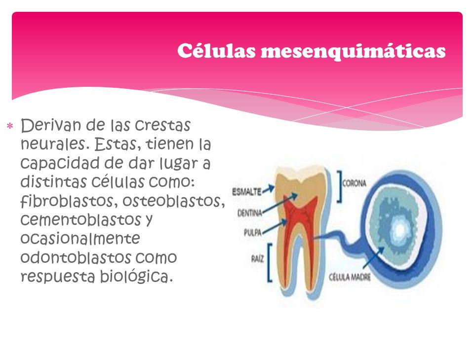Células mesenquimáticas