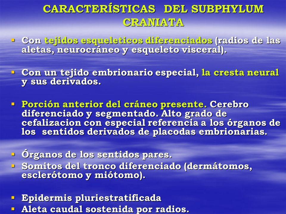 CARACTERÍSTICAS DEL SUBPHYLUM CRANIATA