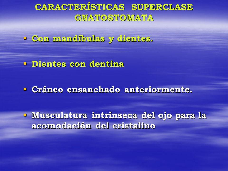 CARACTERÍSTICAS SUPERCLASE GNATOSTOMATA