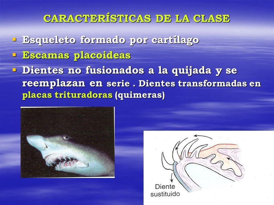 CARACTERÍSTICAS DE LA CLASE