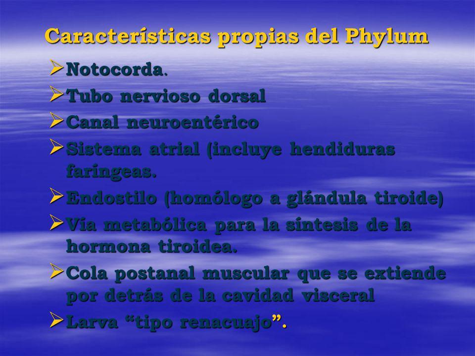 Características propias del Phylum