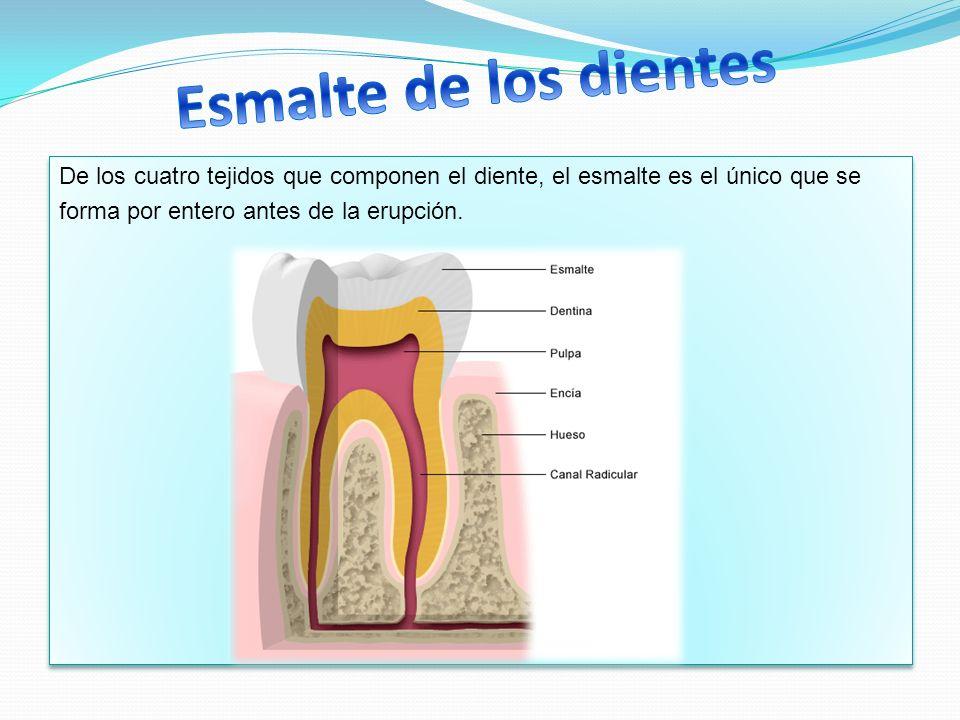 Esmalte de los dientes De los cuatro tejidos que componen el diente, el esmalte es el único que se.