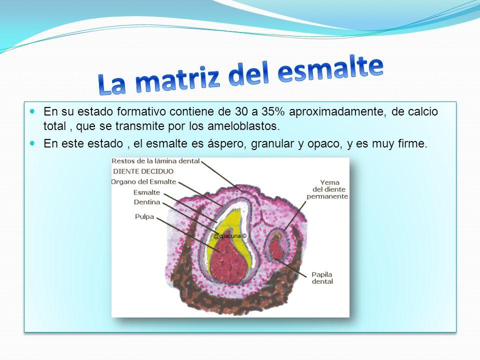 La matriz del esmalte En su estado formativo contiene de 30 a 35% aproximadamente, de calcio total , que se transmite por los ameloblastos.