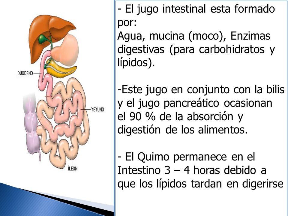 - El jugo intestinal esta formado por: